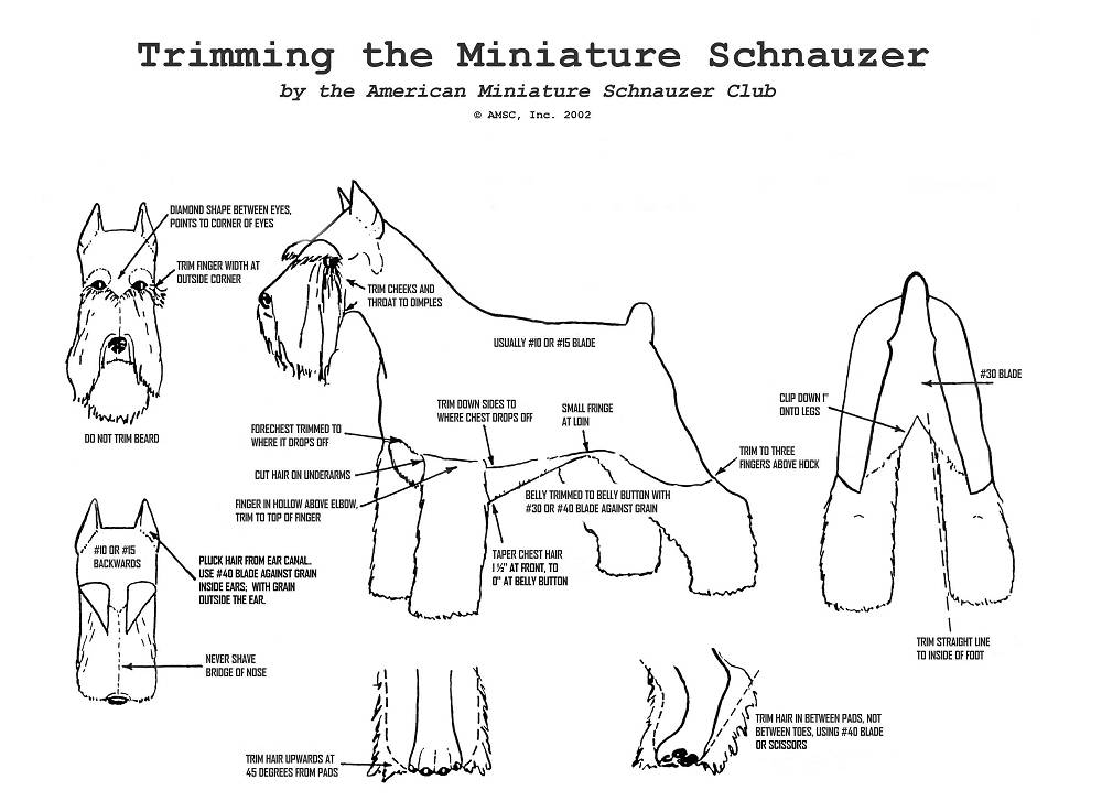 Schnauzer clipping instructions