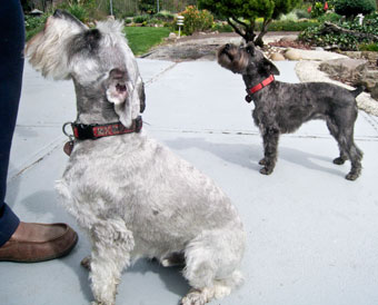 Photo of Rescue Dogs Kolohe and Mailie
