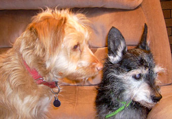 Photo of Rescue Dog Rerun with friend, Tessa