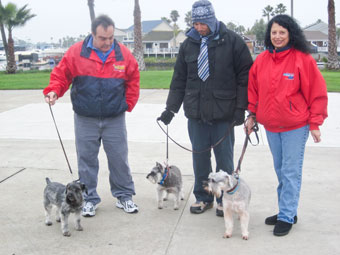 Photo of Rescue Schnauzer Rex and adopters
