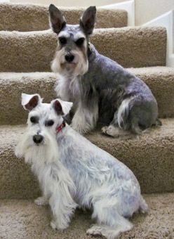 Photo of Rescue Dogs Riley and Peaches