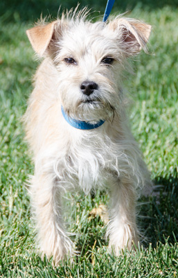 Photo of Rescue Terrier Mix Jesse