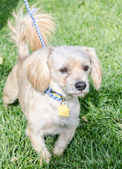 Photo of Rescue Terrier Mix Ricky