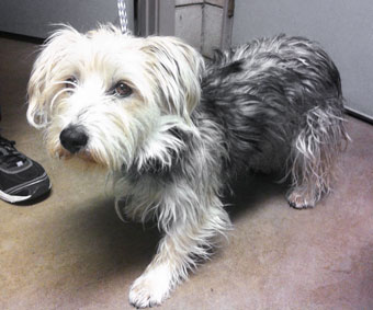 Photo of Rescue Lhasa Blaine