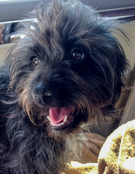 Photo of Rescue Terrier Lisa