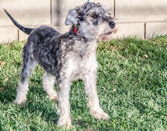 Valley Dogs Rescue Phoenix Az